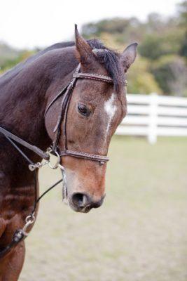 Bridle-horse